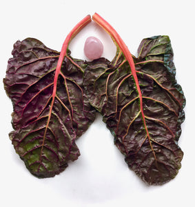 Two red rainbow chard leaves form lungs around a rose quartz heart