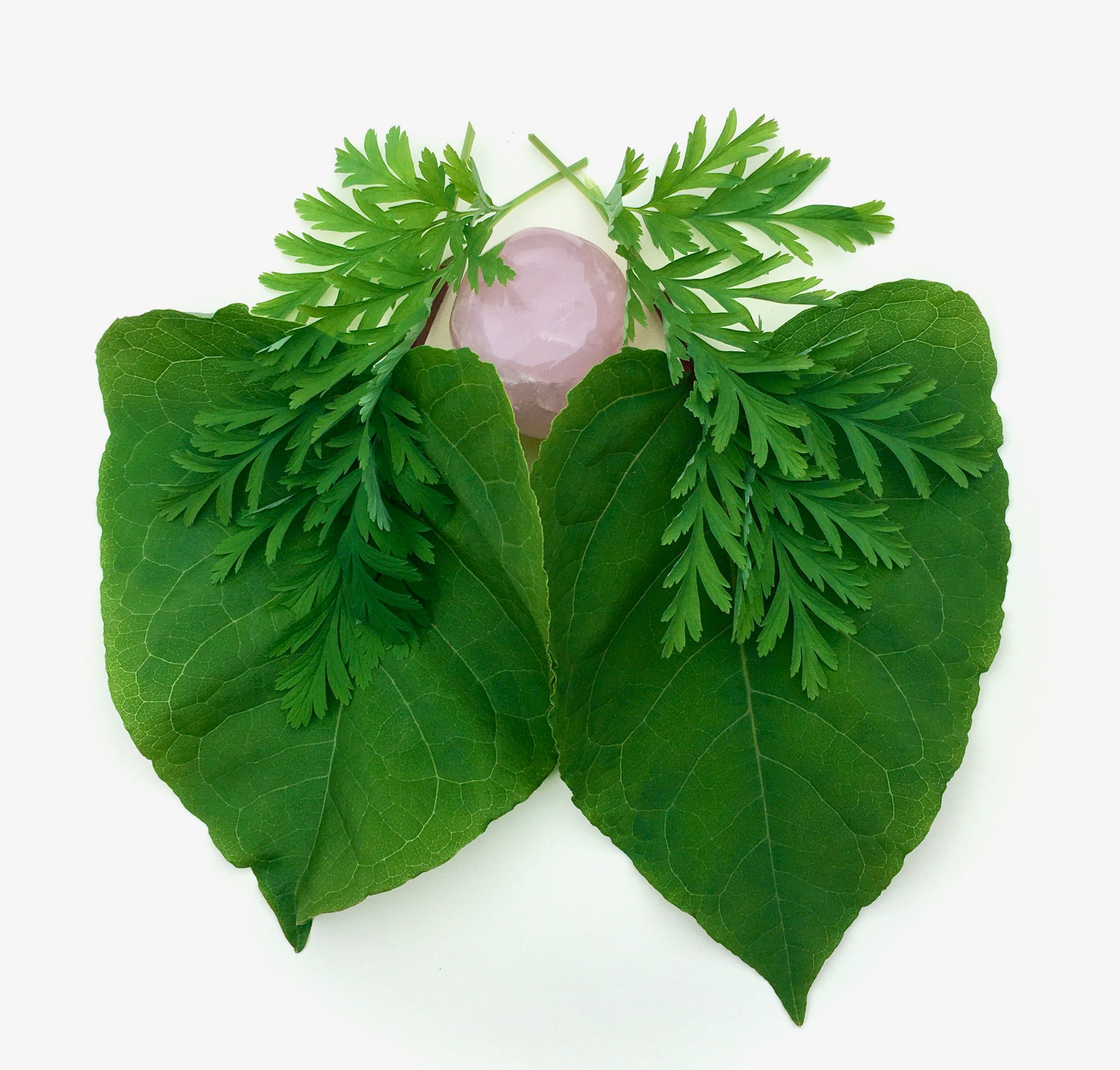 A rose quartz heart, surrounded by lungs made of  gentle Bleeding Heart leaves and large soft Japanese Knotweed leaves.