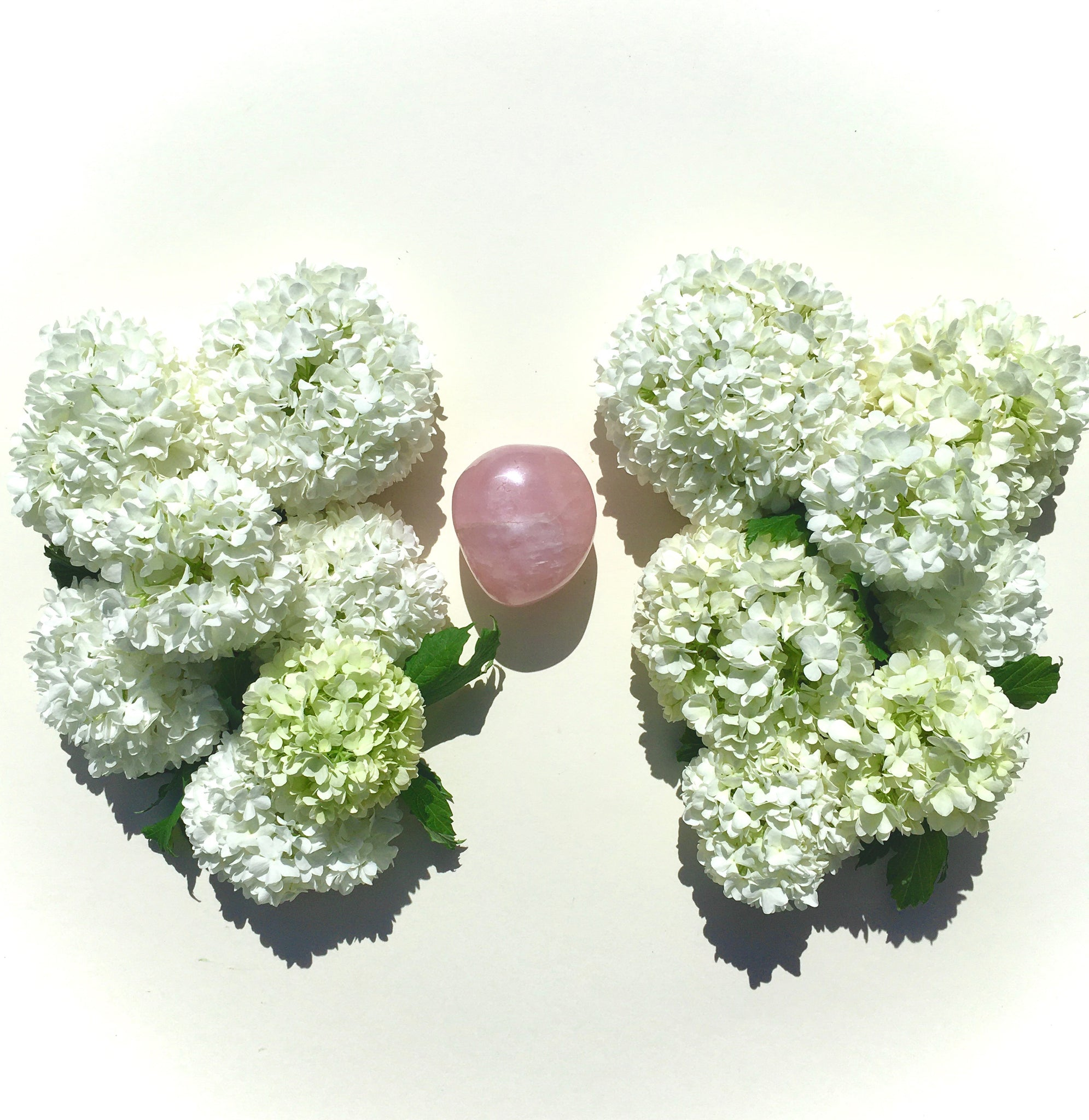 Fluffy round blooms of Vibernum flowers, playfully piled together to look like lungs around a rose quartz heart.