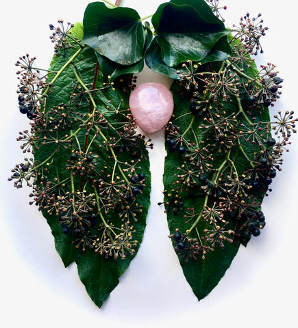 Ivy berries and leaves from two lungs around a rose quartz crystal