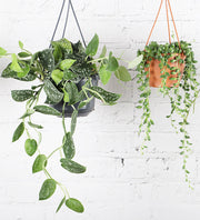 Hanging Houseplant Subscription