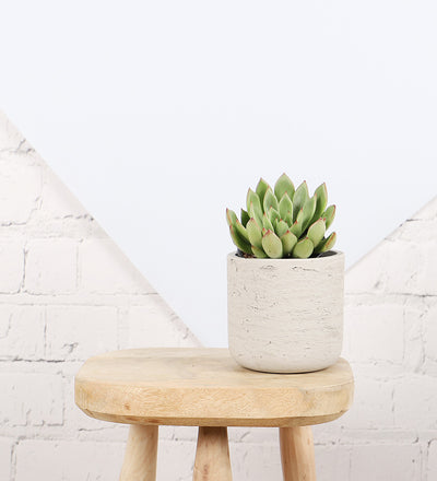 Succulent & Grey Concrete Pot