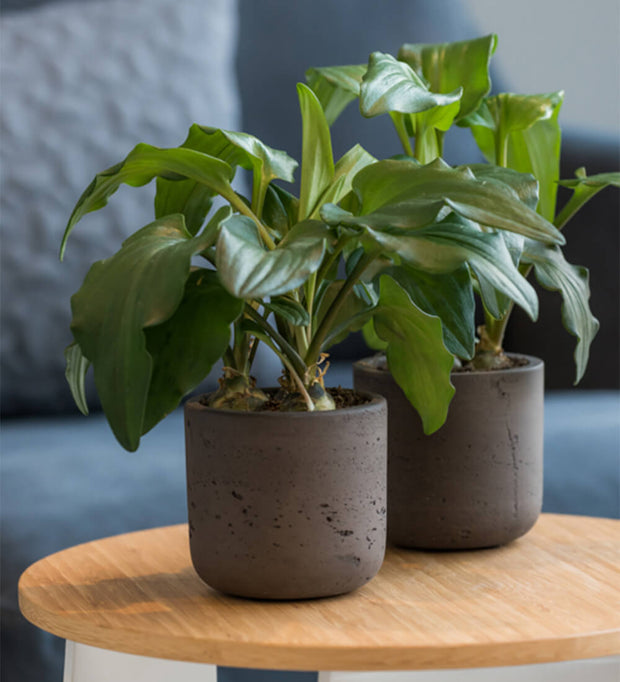 Medium Dark Grey Concrete Plant Pot
