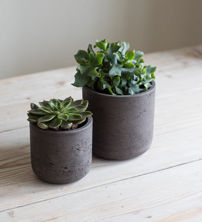 Extra Small Dark Grey Plant Pot
