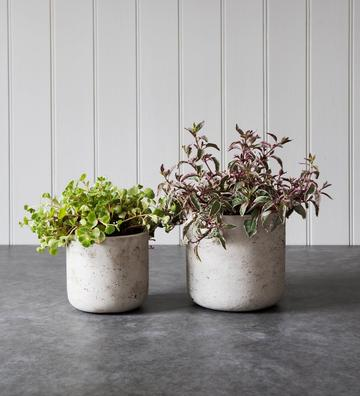 Small Stone Concrete Plant Pot