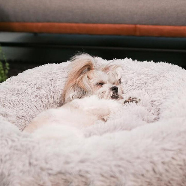Sweet small dog sleeping in a calming anti-anxiety bed by The Puppy Pod