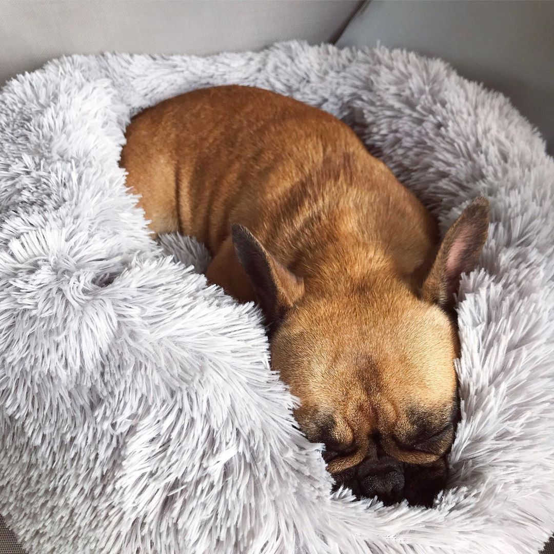 Relaxed dog sleeping in The Puppy Pod Calming Bed