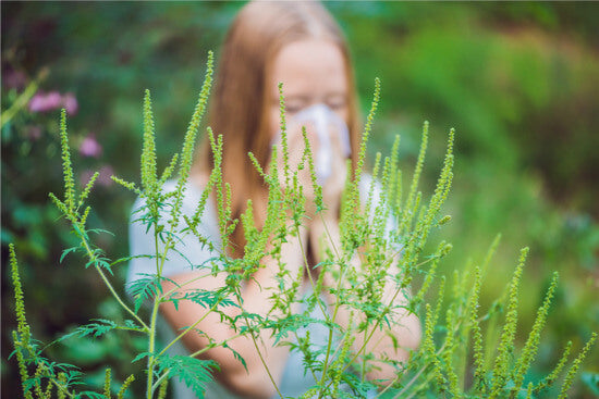 Fall Ragweed Allergies: Symptoms & Treatments
