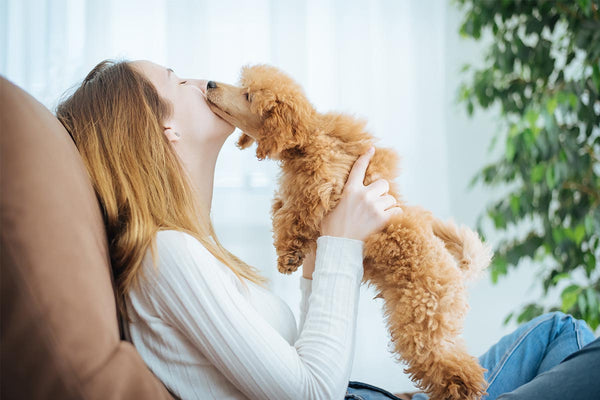 Curist Blog | Dog Allergy