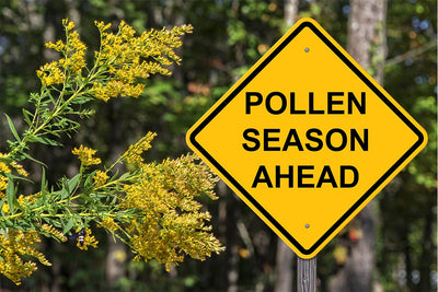 Allergic to Spring? Pollen Allergies are Back
