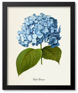 Blue Flower Botanical Prints