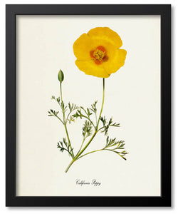 Yellow Flower Botanical Prints