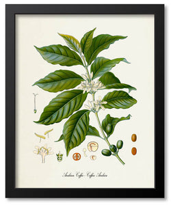 Medicinal Art Botanical Prints