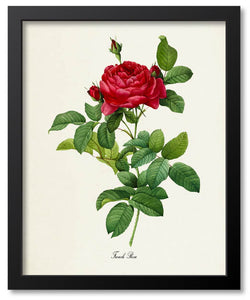 Red Flower Botanical Prints