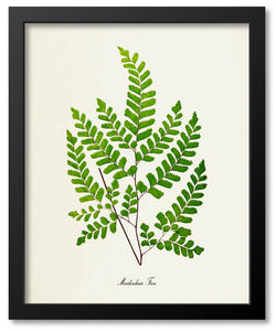 Ferns/Leaves/Plants Botanical Prints
