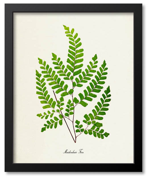 Ferns / Leaves / Plants