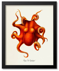 Sea Life Art Prints