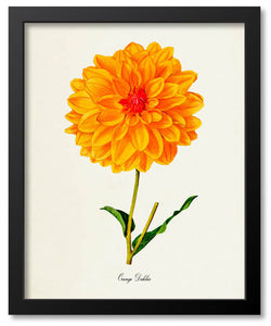Orange Flower Botanical Prints