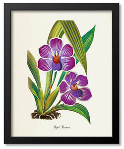 Purple Flower Botanical Prints