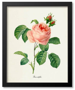 Pink Flower Botanical Prints