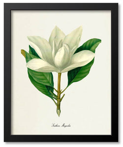 White Flower Botanical Prints