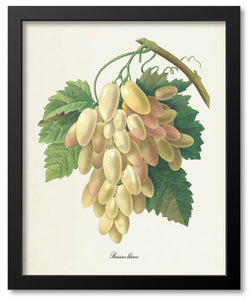 Fruit Botanical Prints