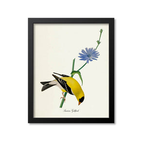 American Goldfinch Bird Print