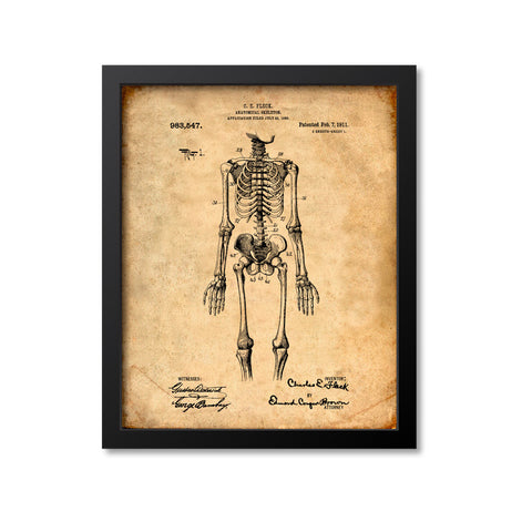 Anatomical Skeleton Print