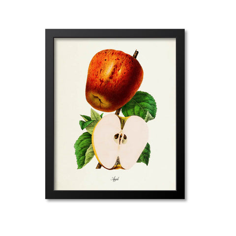 Apple Botanical Print, Apple Seeds