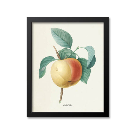 Apple Botanical Print, Calville Blanc Fruit Tree Branch
