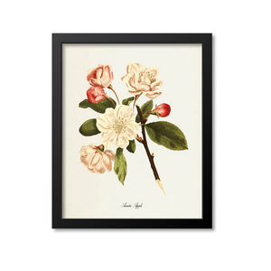 Asiatic Apple Flower Art Print, Crabapple