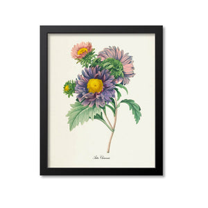 China Aster Flower Print