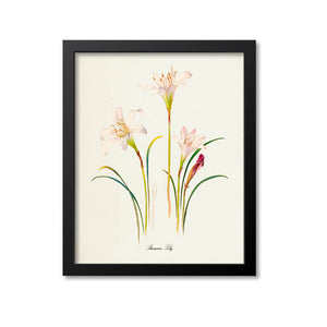 Atamasco Lily Flower Art Print