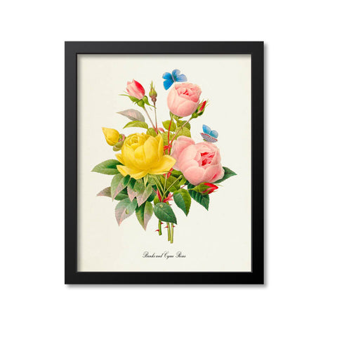 Banks and Cyme Roses Flower Art Print