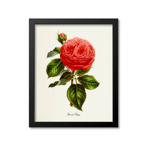 Bernard Palissy Rose Flower Art Print