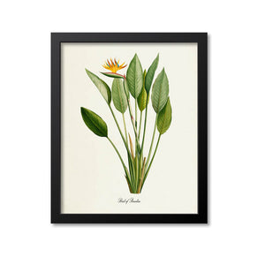 Bird of Paradise Flower Art Print 2