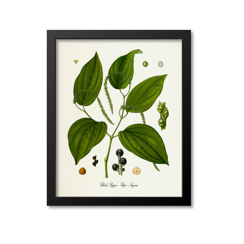 Black Pepper Botanical Print