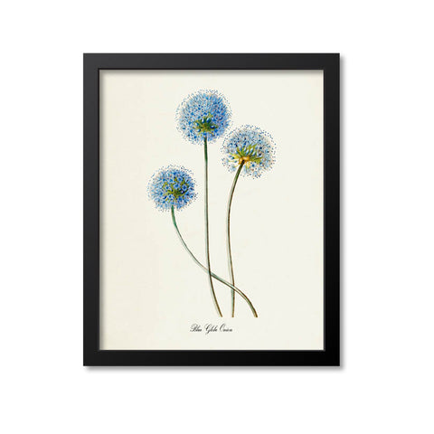 Blue Globe Onion Flower Art Print