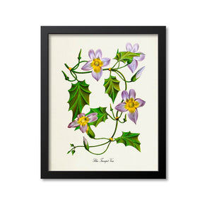 Blue Trumpet Vine Flower Art Print