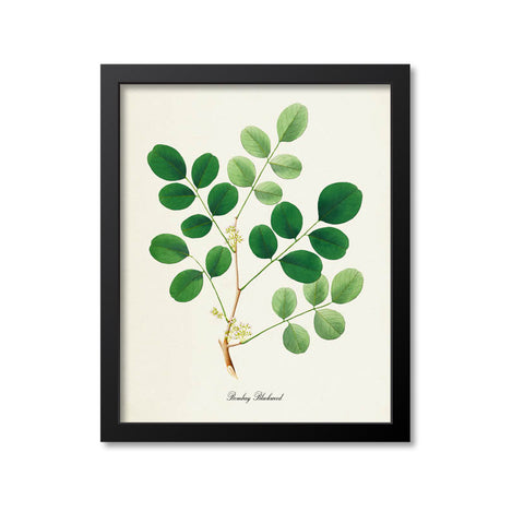 Bombay Blackwood Art Print