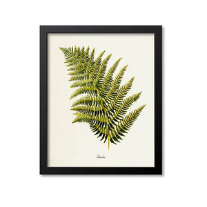 Bracken Fern Art Print