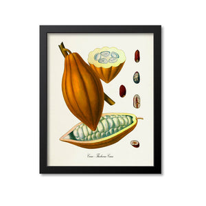 Cacao Botanical Print, Chocolate, Cocoa Beans
