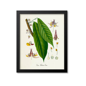 Cacao Botanical Print, Chocolate