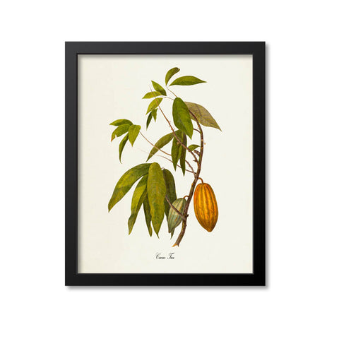 Cacao Tree Art Print, Chocolate, Cocoa Beans