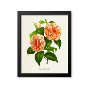Camelia Albino Botti Flower Art Print