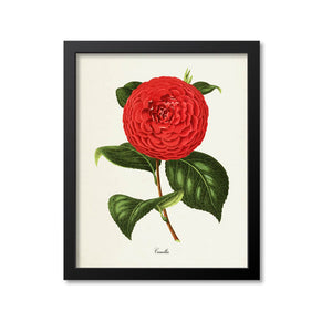 Camellia Flower Art Print, Red