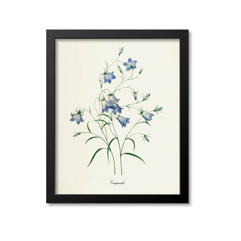 Bellflowers Flower Art Print