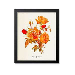 Catherina Guillot Rose Flower Art Print