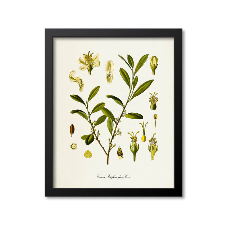 Cocaine Botanical Print