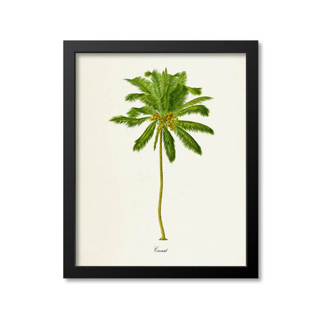 Coconut Tree Art Print